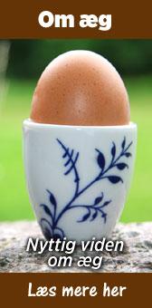 Om æg