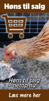 salg af høns
