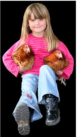 Pasning af høns